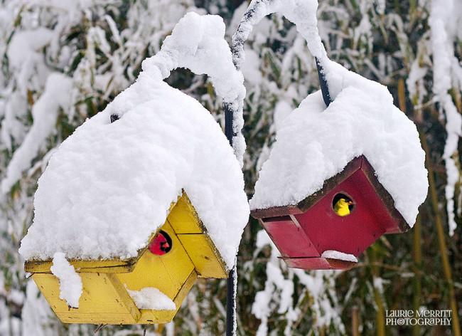 snowday-9454_900_3