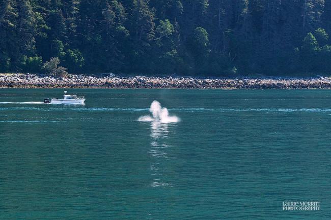 Juneau-9656_900