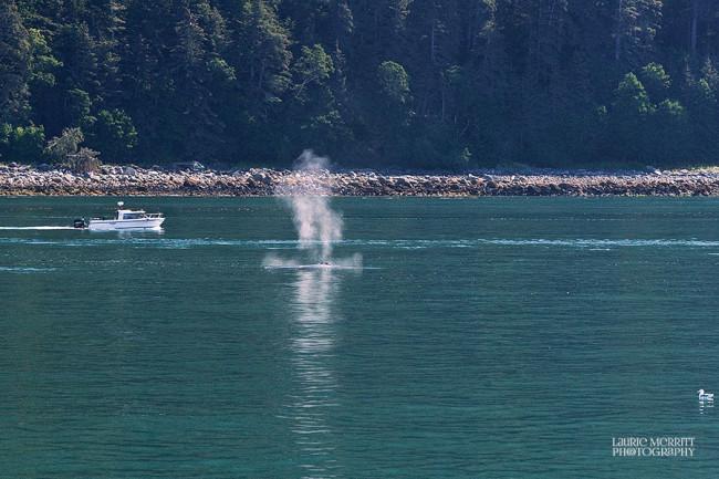 Juneau-9658_900