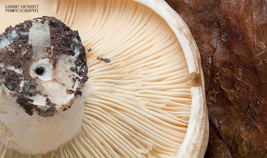 mushroom1-8195-8203_900