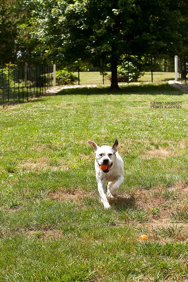 SPCA-1167_900