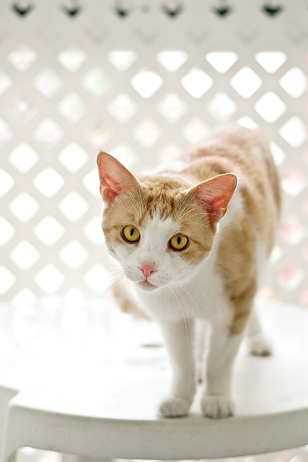 SPCA-1274_3