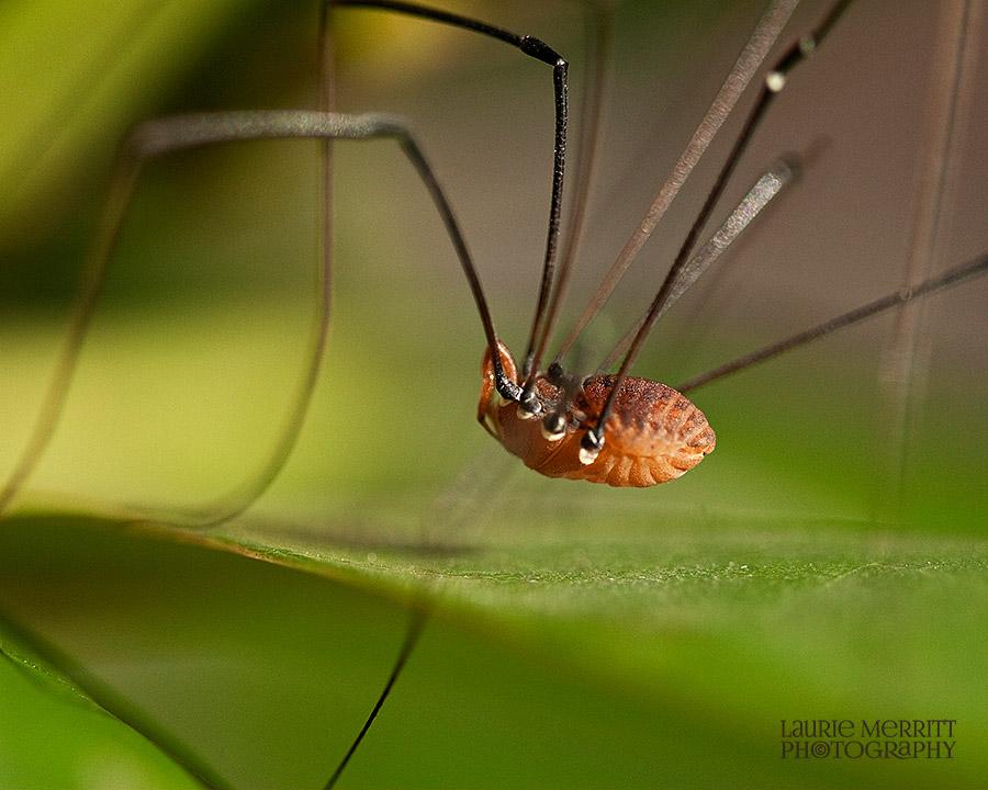 bugs-9614_900
