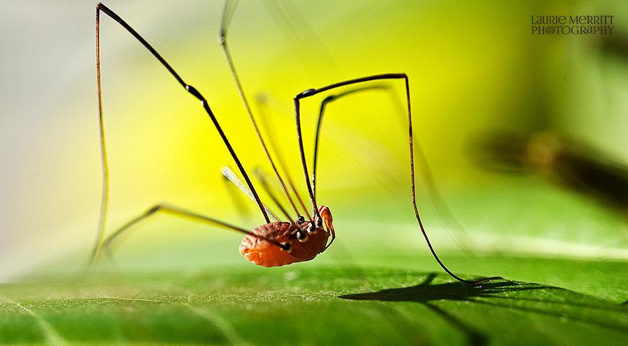 bugs-9617_900