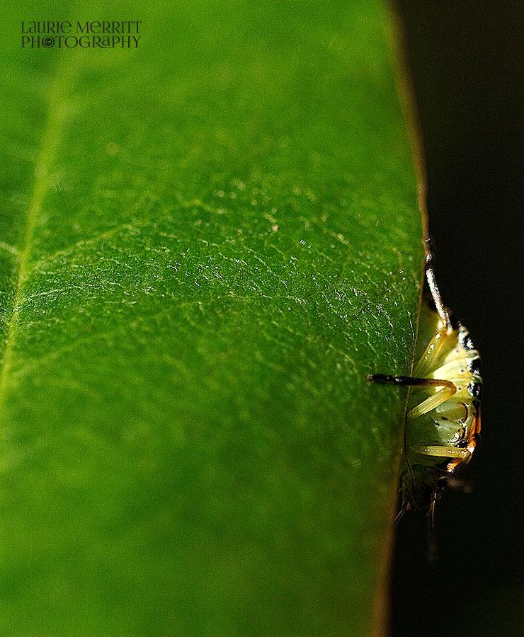 bugs-9639_900