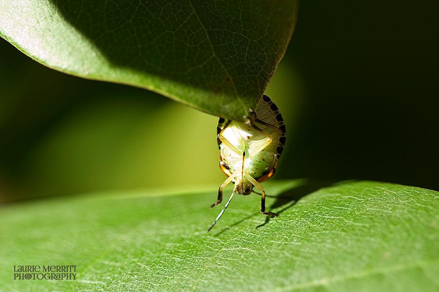 bugs-9655_900