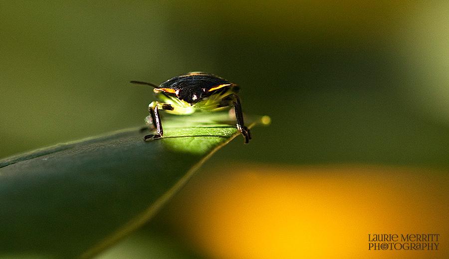 bugs-9685_900