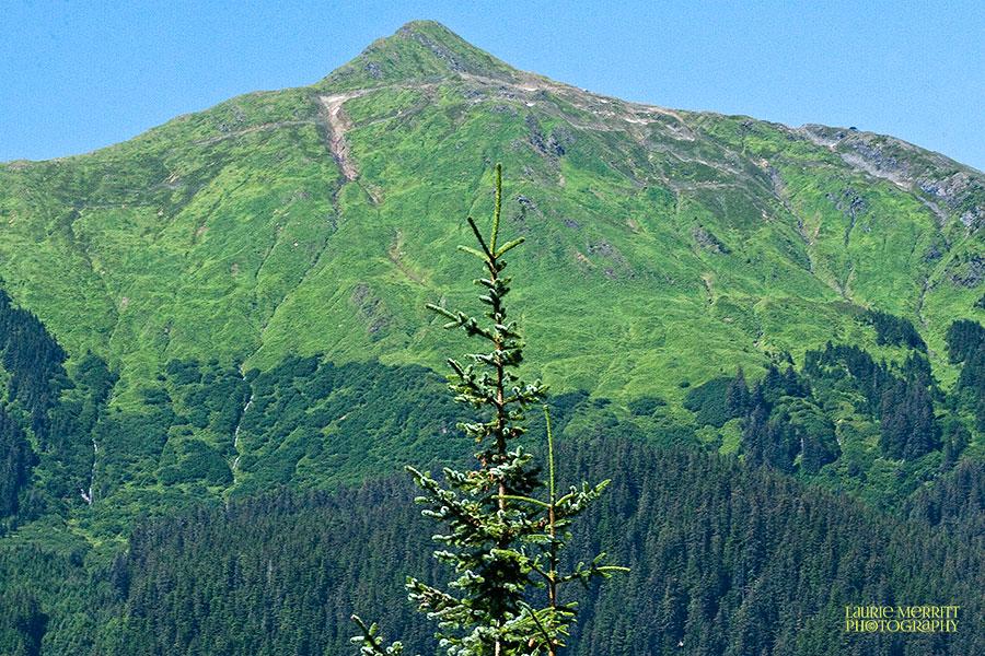 Juneau-0098_900