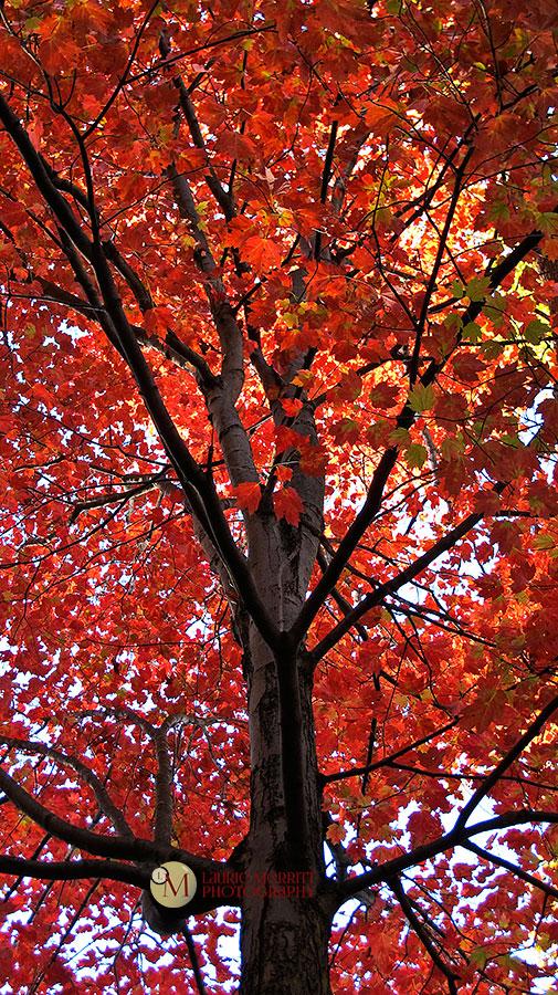 leaves-7024_900