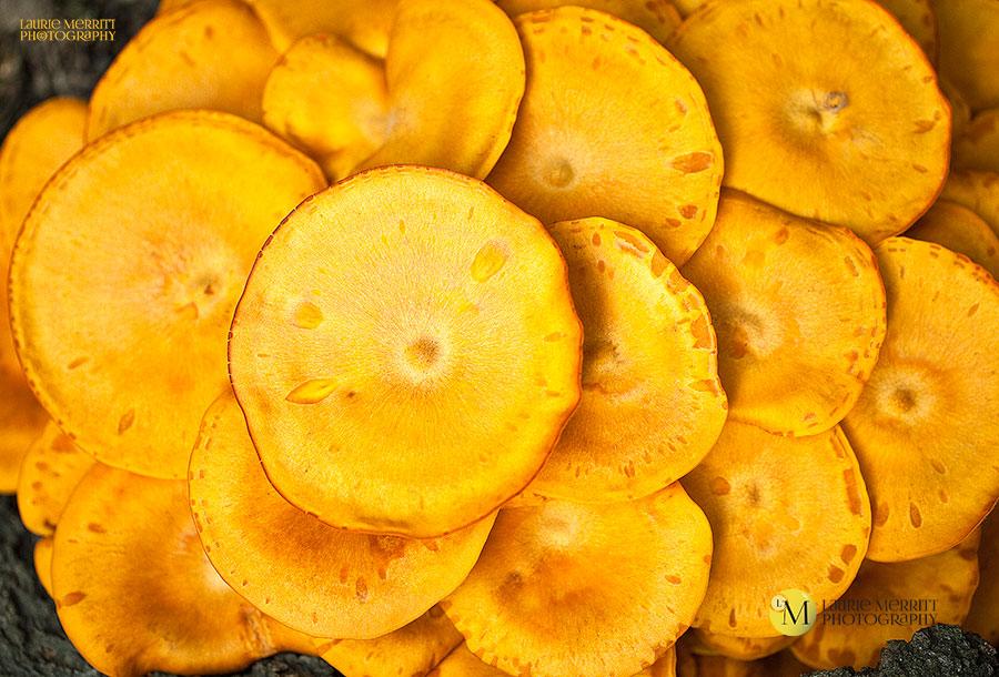 OrangeMushrooms-1877_900