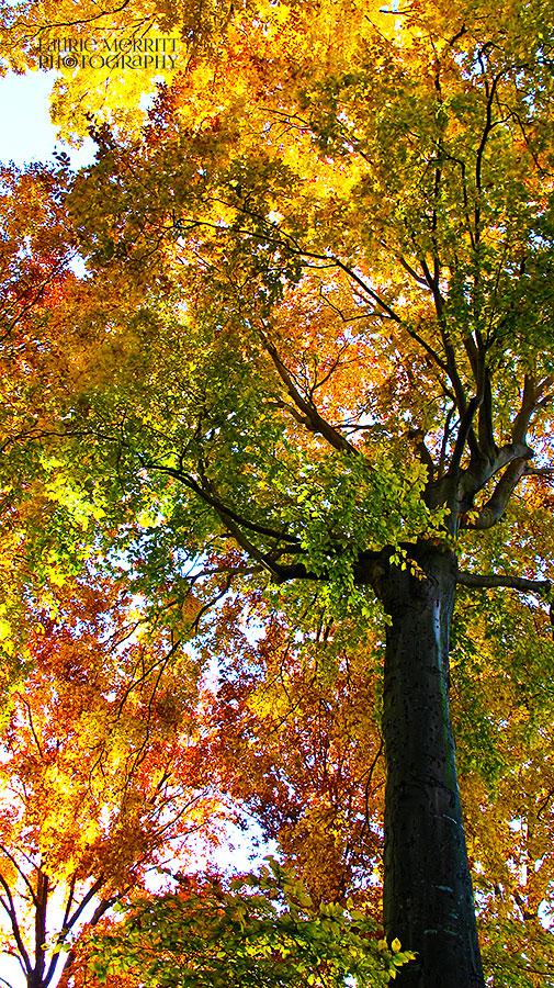 leaves-7012_900