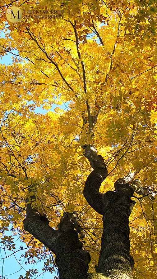 leaves-7014_900