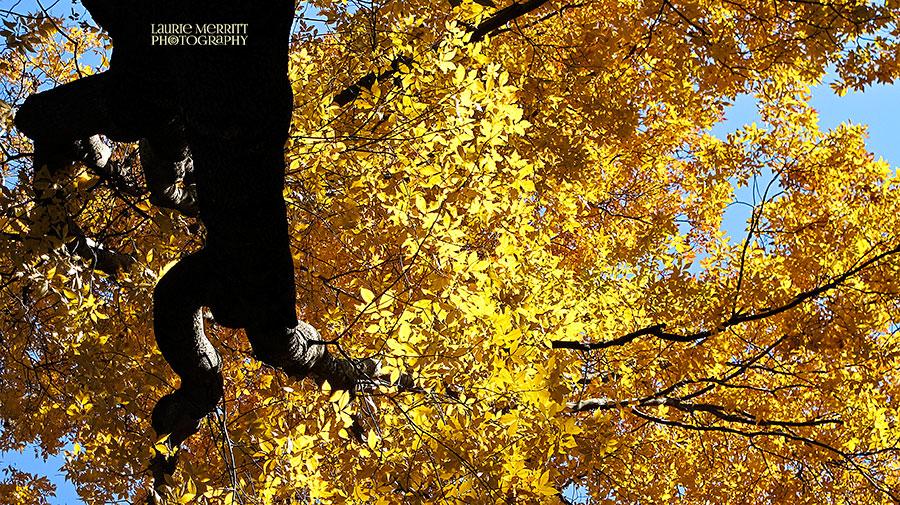 leaves-7039_2