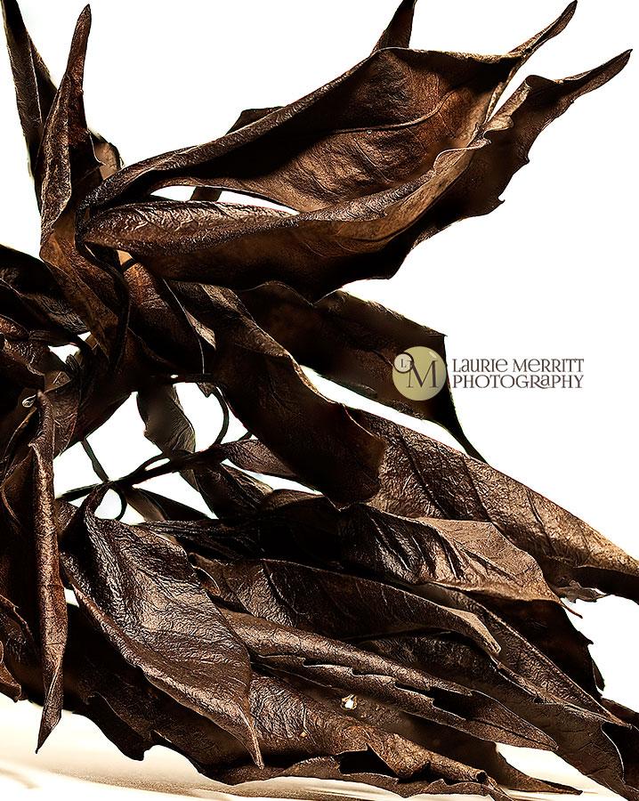 leaves1-2851-63_2_900