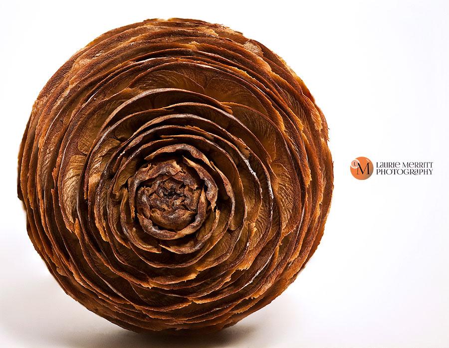 pinecone2-2741-62_900