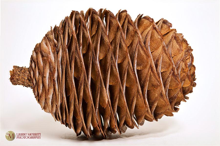 pinecone3-2786-2808_900
