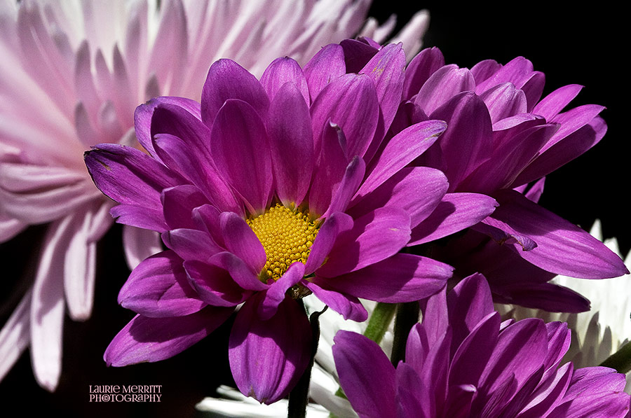 floral-6103-05_900
