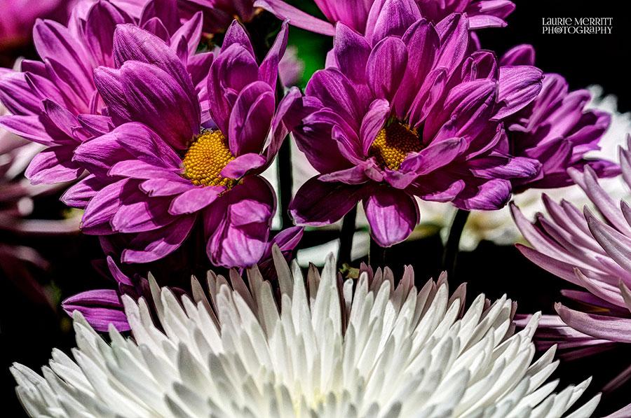 floral-6137_8_9_fused_900