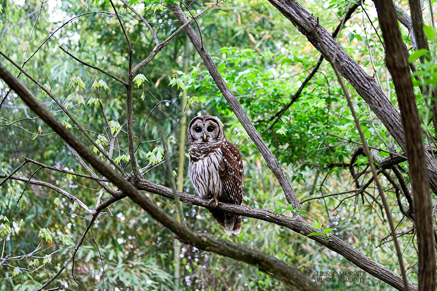 owl-3108_900