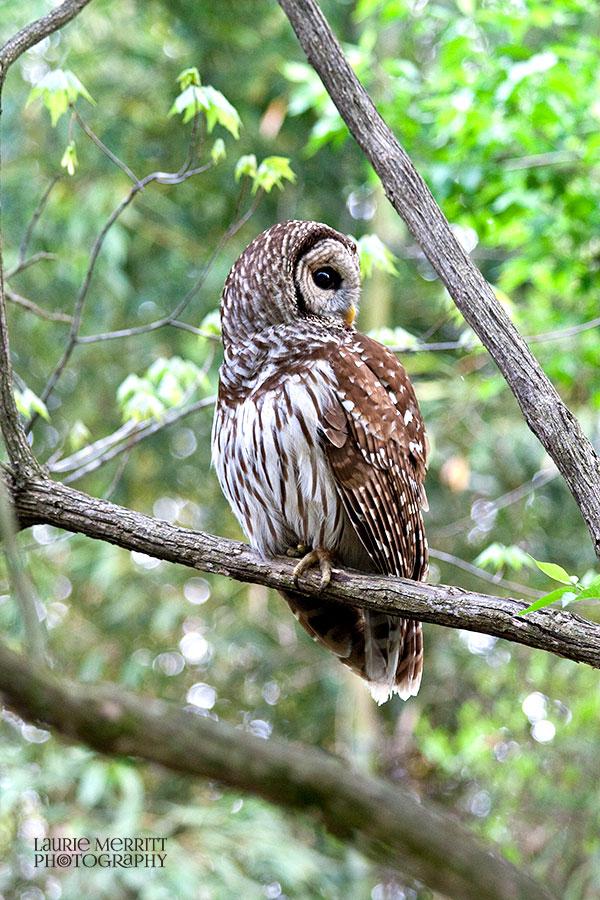 owl-3110_900