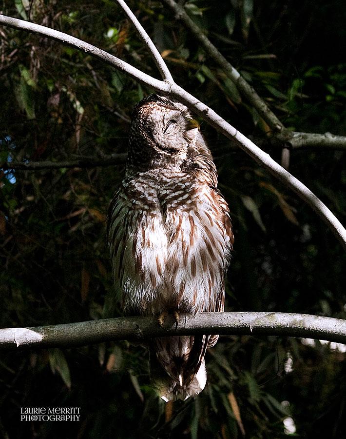 owl-3252_900