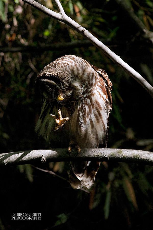 owl-3265_900