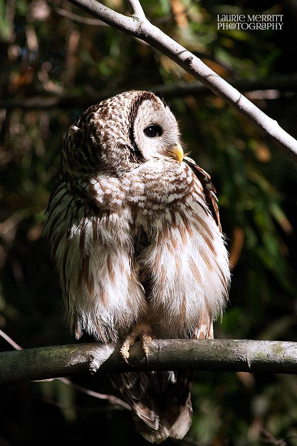 owl-3269_900